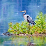 The Great Blue Heron 12x12