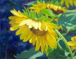 Sunflower Delight 16x20
