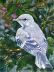 Young Mockingbird12x9