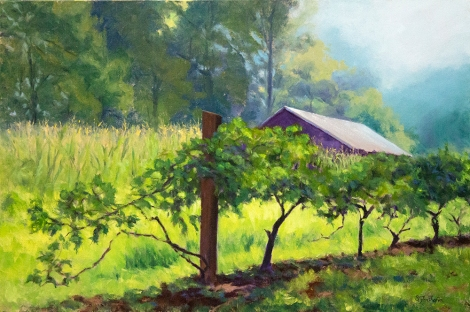 Vineyard Morning 24x36